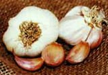 Garlic_and_shallots_allium_sativum_mild_french-1.full