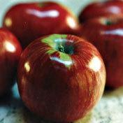 Apple_tree_snow_apple.full