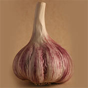 Garlic_hardneck_purple_glazer.full