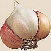 Garlic_softneck_mother_of_pearl.full