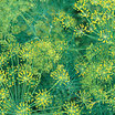 Dill_bouquet.thumb