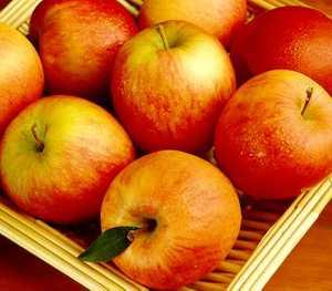 Apple Tree, Semi-dwarf 'Fuji'