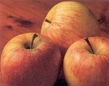 Apple Tree, Dwarf 'Gala'