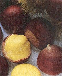 Chestnut Tree, Manchurian