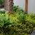 Hosta_garden.small