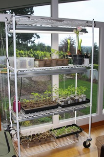 Seed starting rack in living room