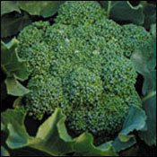 Broccoli_calabrese.medium.detail