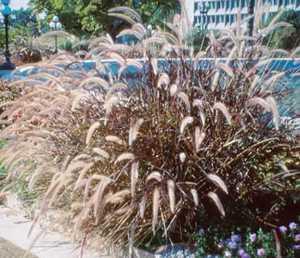 Grass, Fountain
