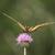 Tigerswallowtail2.small