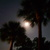 Cabbage_palms_w_full_moon.small