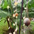 Shell_wind_chimes.small