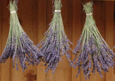 Lavender_drying.detail
