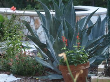 Back_garden.detail