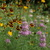 Meadow1.small