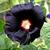 Hollyhock_black.small