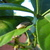Baby_tree_frog.small