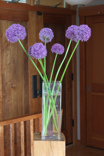 Globemaster Allium Stems