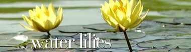 Waterliliesbanner520x144.detail