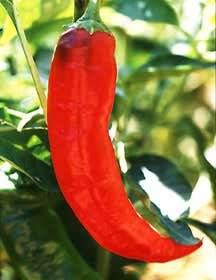 Peppers_capsicum_annuum_paprika-1.full