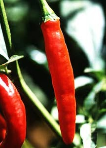 Pepper, Chile 'Thai' (Asian Heirloom, Pre-1900's)