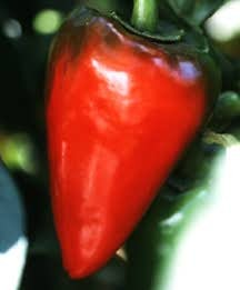 Pepper, Sweet 'Red Heart'