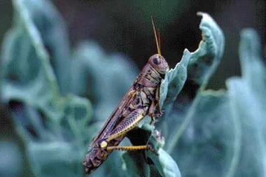 Grasshopper.detail