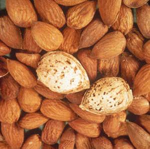 Almond Tree, 'All-In-One' semi-dwarf