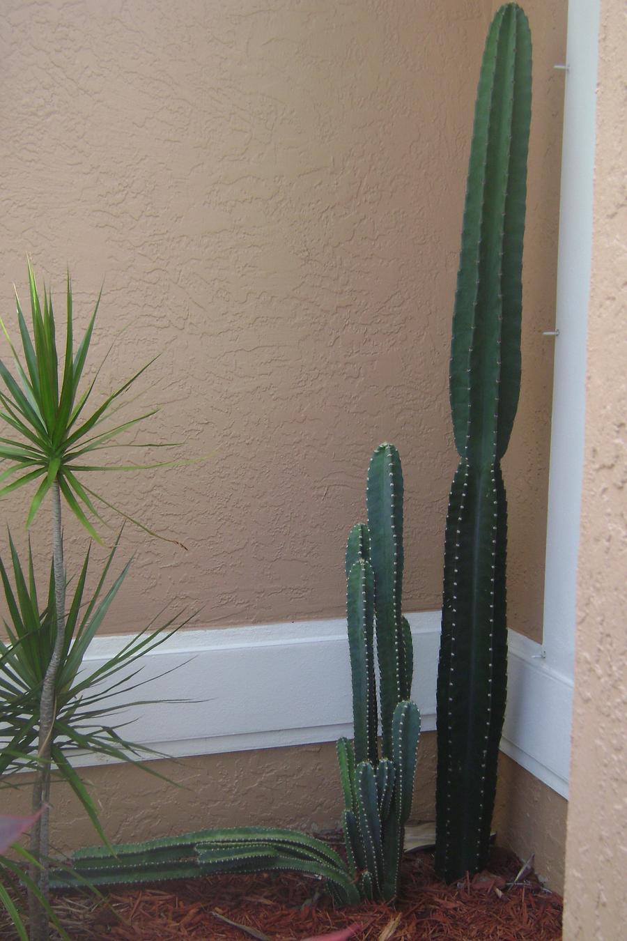 Cactus_full.full