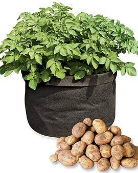 Potato-grow-bag.full