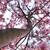 Thd_snowing_magnolia_-_4-16-19_012.small