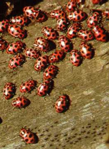 Ladybugs.detail
