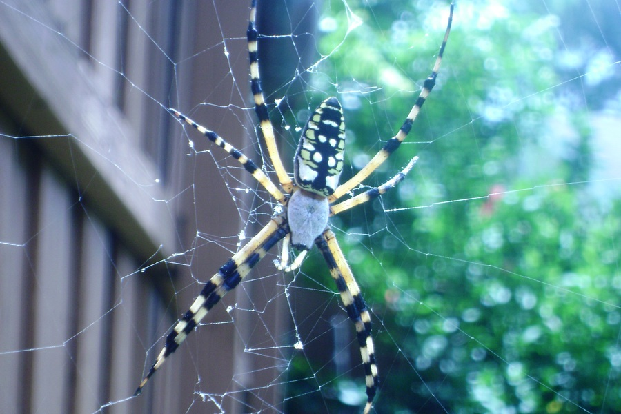 Writing_spider.full