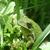Frog_close.small