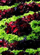 Fall-veg-1.large