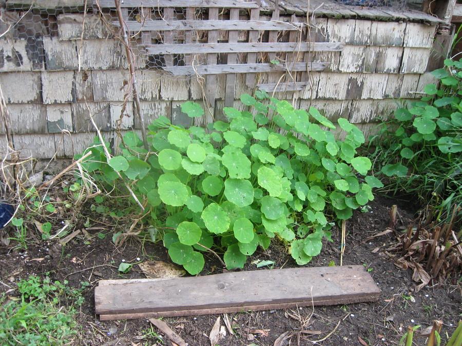 Gardening_gate_building_runyon_canyon_045.full
