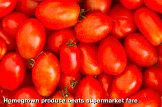 Tomatoes-green-manifesto.full