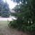 Big_trees_1.small