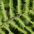 Fly_on_fern.small