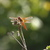 Dragon_fly.small