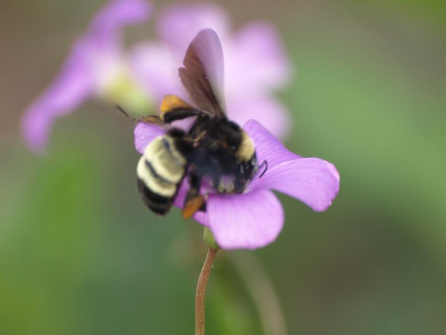 Bee.full