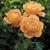 Roses-lady-of-shalott.small