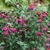 Fall_garden_color_2.small