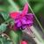 Fall_garden_color_3.small