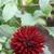 Fall_garden_color_6.small