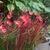 Fall_garden_color_7.small