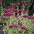 Fall_garden_color_8.small