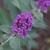 Fall_garden_color_9.small