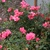 Fall_garden_color_12.small