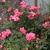 Fall_garden_color_12.small