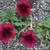 Fall_garden_color_14.small